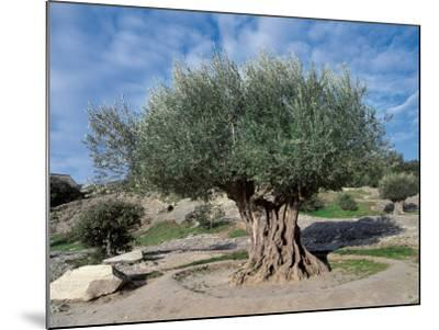 Olive Tree in the Forest (Olea Europaea)-C^ Sappa-Mounted Photographic Print