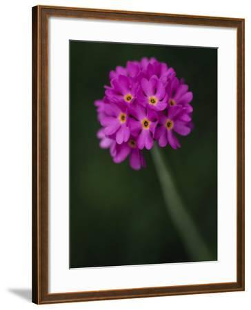 A Purple Flower--Framed Photographic Print