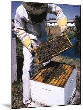 Honeycomb Held by Beekeeper-Jeff Foott-Mounted Photographic Print