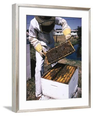 Honeycomb Held by Beekeeper-Jeff Foott-Framed Photographic Print