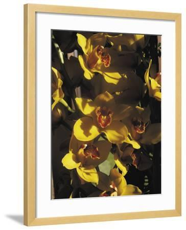 Close-Up of Orchid Flowers-C^ Sappa-Framed Photographic Print