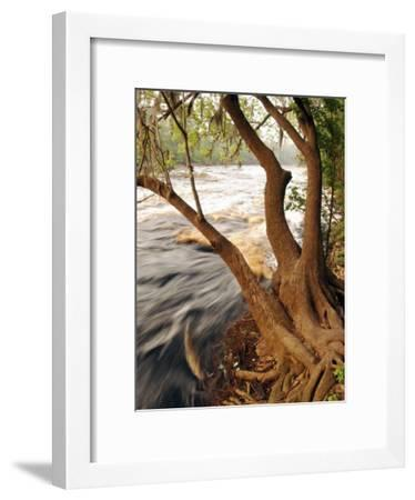 Florida, White Springs, Way Down on the Suwannee River Is Big Shoals State Park-John Moran-Framed Photographic Print