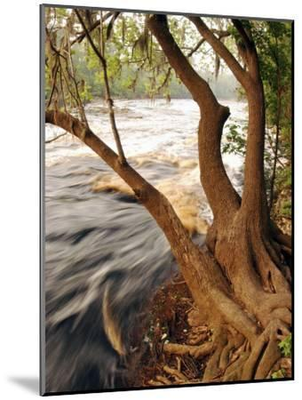 Florida, White Springs, Way Down on the Suwannee River Is Big Shoals State Park-John Moran-Mounted Photographic Print