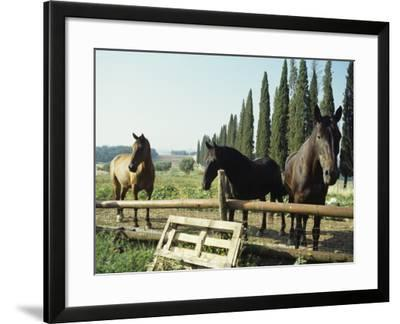 Horses on Farm in Siena, Italy--Framed Photographic Print