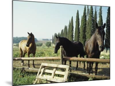 Horses on Farm in Siena, Italy--Mounted Photographic Print