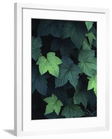 Close-Up of Leaves--Framed Photographic Print