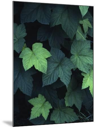 Close-Up of Leaves--Mounted Photographic Print