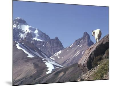 Mountain Goat Stands on Steep Mountain Ledge-Jeff Foott-Mounted Photographic Print