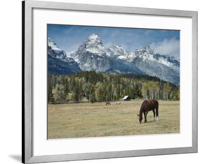 Mountain Looms High as Horses Graze-Jeff Foott-Framed Photographic Print