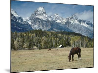 Mountain Looms High as Horses Graze-Jeff Foott-Mounted Photographic Print