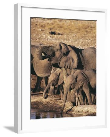 Herd of African Elephants Drinking Water, Etosha National Park, Namibia (Loxodonta Africana)-S^ Boustani-Framed Photographic Print