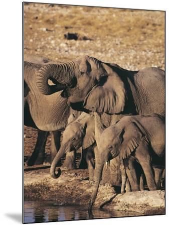 Herd of African Elephants Drinking Water, Etosha National Park, Namibia (Loxodonta Africana)-S^ Boustani-Mounted Photographic Print