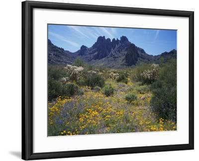 Usa, Arizona, Organ Pipe Cactus National Monument, Wildflowers on the Mountain-Jeff Foott-Framed Photographic Print