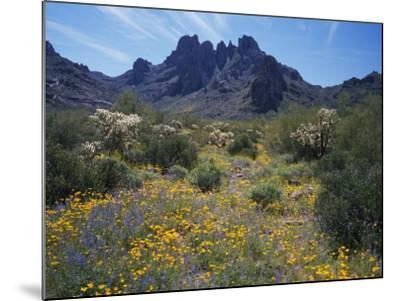 Usa, Arizona, Organ Pipe Cactus National Monument, Wildflowers on the Mountain-Jeff Foott-Mounted Photographic Print
