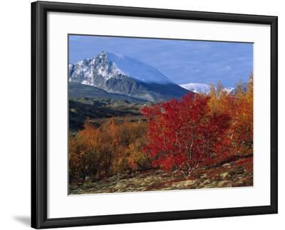 Autumn Colours in Norrland, Sweden--Framed Photographic Print
