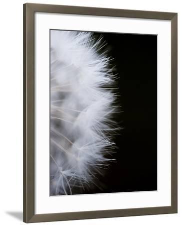 Close-Up of a Dandelion Flower--Framed Photographic Print
