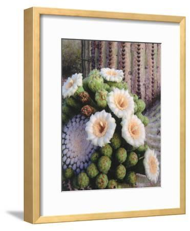 Detail of White and Peach Blooms on Saguaro Cactus-Jeff Foott-Framed Photographic Print