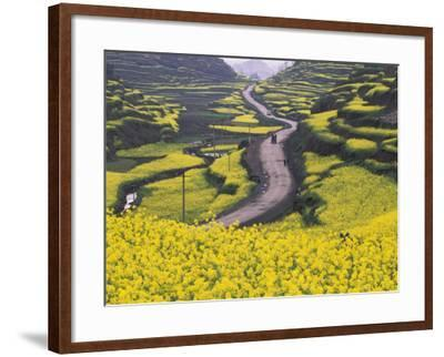 China, Guizhou Province, Mountain Covered with Canola Flowers-Keren Su-Framed Photographic Print