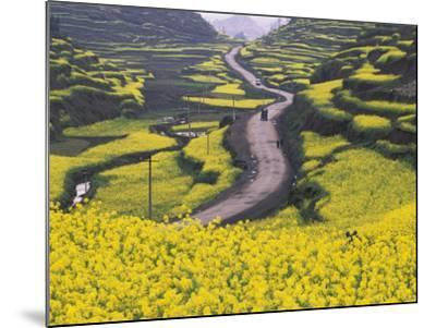 China, Guizhou Province, Mountain Covered with Canola Flowers-Keren Su-Mounted Photographic Print
