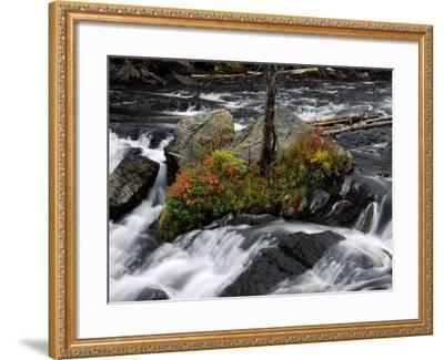 Lewis Falls, Yellowstone Np, Wyoming-Jeff Foott-Framed Photographic Print