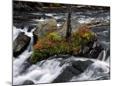 Lewis Falls, Yellowstone Np, Wyoming-Jeff Foott-Mounted Photographic Print