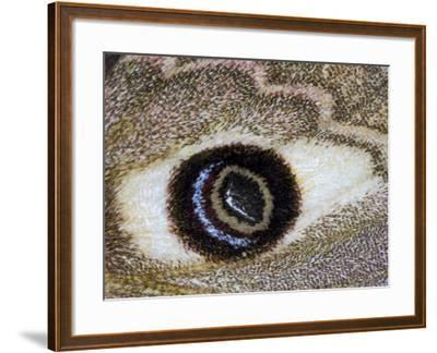Close-Up of an Eye Pattern on the Wing of a Butterfly--Framed Photographic Print