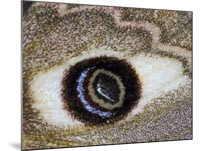 Close-Up of an Eye Pattern on the Wing of a Butterfly--Mounted Photographic Print