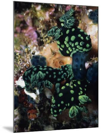 Spotted Branches Growing Atop Multi-Colored Coral Heads in Ocean Bunaken Island--Mounted Photographic Print