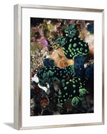 Spotted Branches Growing Atop Multi-Colored Coral Heads in Ocean Bunaken Island--Framed Photographic Print