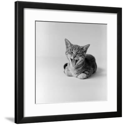 Kitten Lying Down, Yawning-H^ Armstrong Roberts-Framed Photographic Print