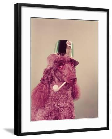 Poodle Dog With Pipe in Mouth, Wearing Green Paper Party Hat For St Patrick's Day-H^ Armstrong Roberts-Framed Photographic Print