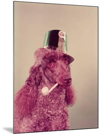 Poodle Dog With Pipe in Mouth, Wearing Green Paper Party Hat For St Patrick's Day-H^ Armstrong Roberts-Mounted Photographic Print