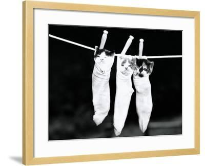 Three Kittens in Socks, Hanging From Clothes Line-H^ Armstrong Roberts-Framed Photographic Print
