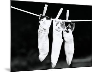 Three Kittens in Socks, Hanging From Clothes Line-H^ Armstrong Roberts-Mounted Photographic Print
