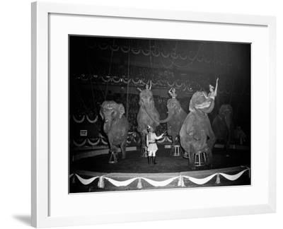 Circus Elephants-H^ Armstrong Roberts-Framed Photographic Print