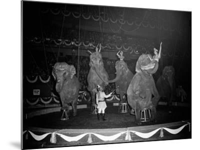 Circus Elephants-H^ Armstrong Roberts-Mounted Photographic Print