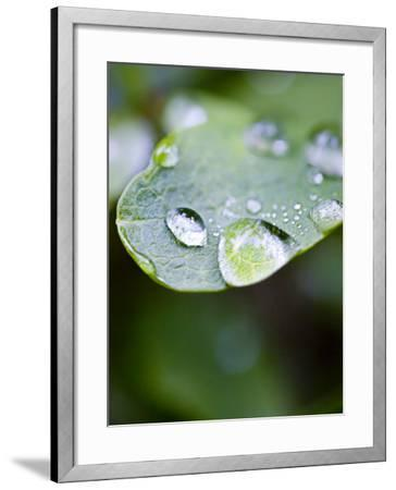 Close-Up of Dew Drops on a Leaf--Framed Photographic Print