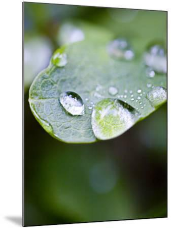 Close-Up of Dew Drops on a Leaf--Mounted Photographic Print