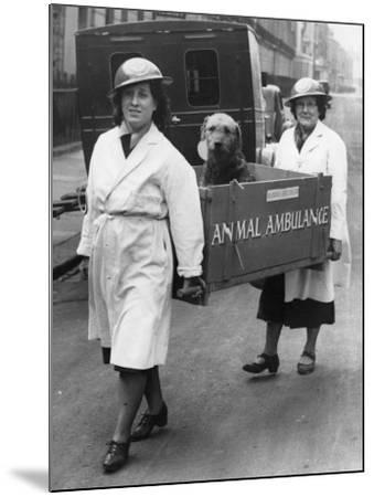 Animal Ambulance--Mounted Photographic Print