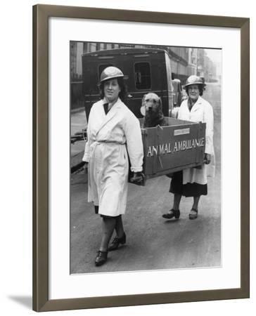 Animal Ambulance--Framed Photographic Print