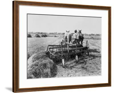 Haymaking in Canada--Framed Photographic Print