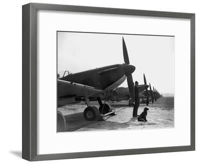 Spitfires at Duxford--Framed Photographic Print