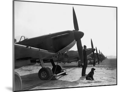 Spitfires at Duxford--Mounted Photographic Print