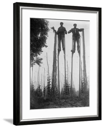 Stilt Walkers--Framed Photographic Print