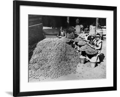 Peeling Onions--Framed Photographic Print