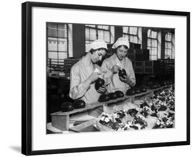Cadbury Eggs--Framed Photographic Print