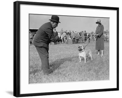 Bad Bulldog--Framed Photographic Print