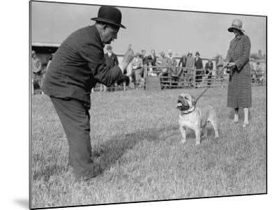 Bad Bulldog--Mounted Photographic Print