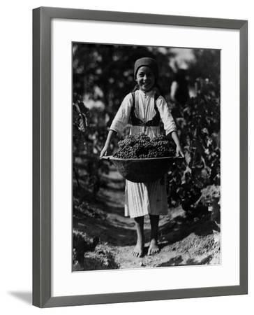 Grape Harvest--Framed Photographic Print
