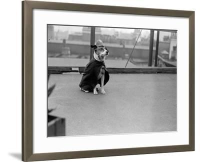 Police Dog--Framed Photographic Print